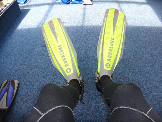 Whangarei, Νέα Ζηλανδία: Snorkel