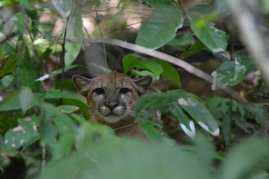 Carate, Costa Rica: Disfrutando de una vella experiencia