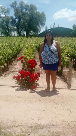Bodega Luigi Bosca Familia Arizu : viñedos