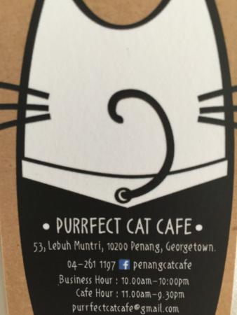Business card picture of purrfect cat cafe george town tripadvisor purrfect cat cafe business card colourmoves