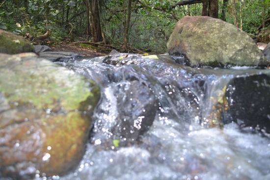 African Fund for Endangered Wildlife (Kenya) Ltd. - Giraffe Centre: nice flowing stream
