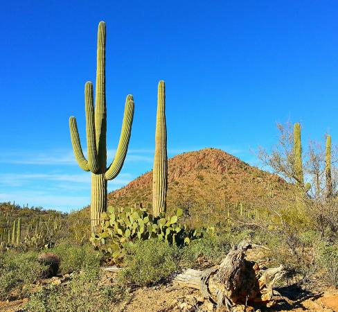 Tucson Mountain Park Foto