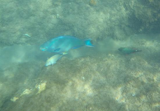 Champagne Beach: Snorkeling at Champagne Reef