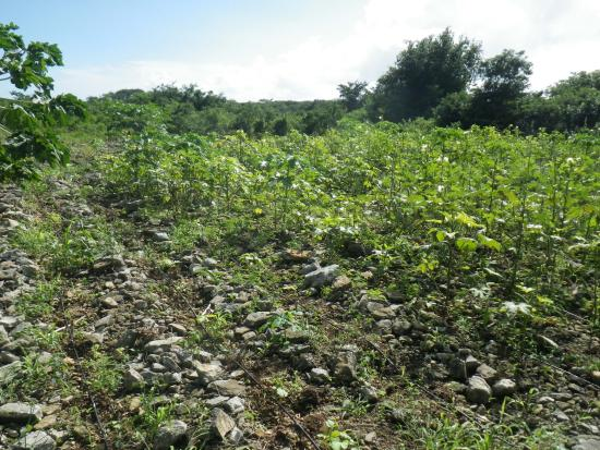 North Caicos: Government Farm
