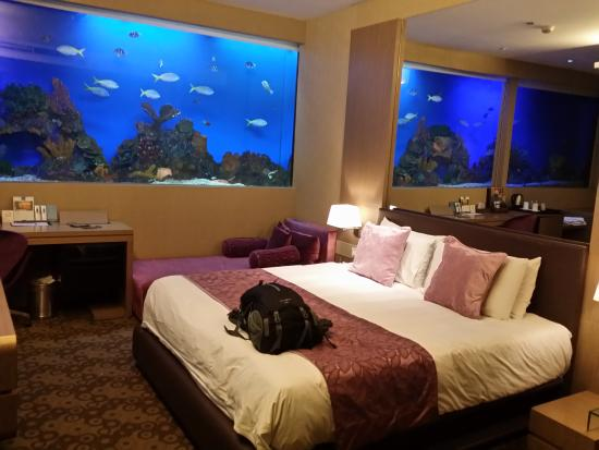 Bathtub Swim With The Fish Picture Of Hotel H2o