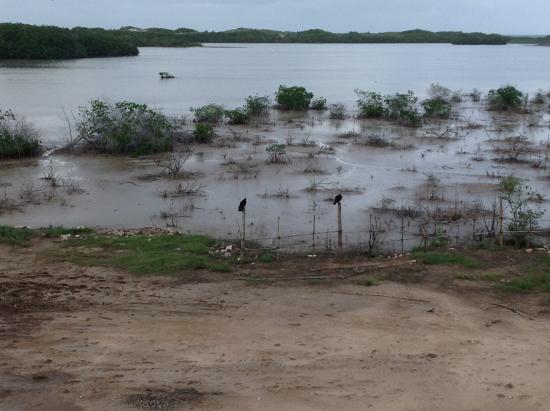 Muddy lagoon ocean view picture of melia jardines del for Jardines del rey