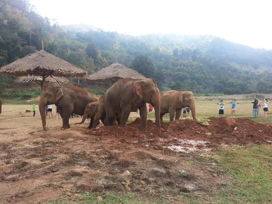 Провинция Канчанабури, Таиланд: 20151230_132128_large.jpg