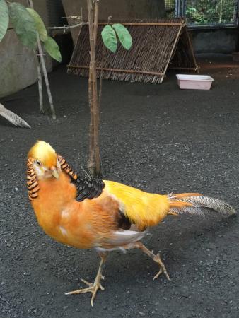 Fenghuanggu Bird Park