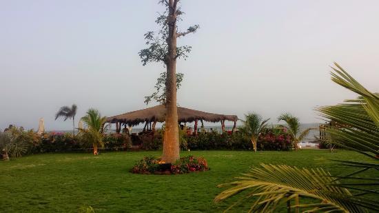 Jardin foto van royal horizon baobab somone tripadvisor for Baobab jardin