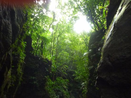 Extreme Dominica Canyoning & Adventure Tours: forest