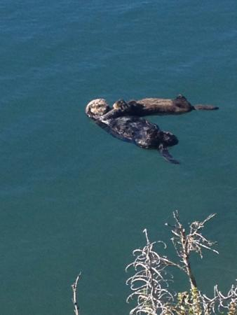 Bayfront Inn: Otters in the bay.