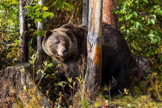 Palliser Lodge: Grizzley Bear Refuge