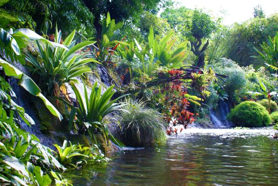 20151230 111221 picture of jardin botanique de for Jardin botanique guadeloupe