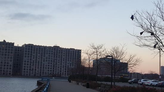 view from boardwalk picture of sheraton lincoln harbor. Black Bedroom Furniture Sets. Home Design Ideas