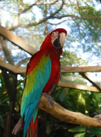 Les perroquets dociles photo de jardin botanique de - Jardin botanique guadeloupe basse terre ...