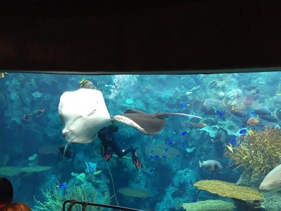 Muy Padre Picture Of Aquarium Of The Pacific Long Beach