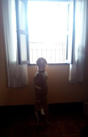 Hotel Posada Dona Luisa: IMG_20151230_113541_large.jpg