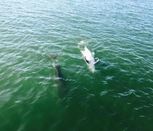 Dolphin Landings Charter Boat Center: They were so playful!