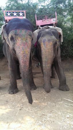 My Elephant Trip