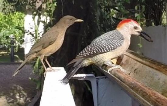 Hacienda la Esperanza: Some of the many birds we have