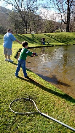 Grandfather Trout Farm: IMG_20151229_112615609_large.jpg