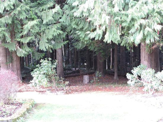 The Front Yard Woods Picture Of Sea Cliff Gardens Bed