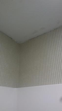 Magnuson Hotel Commerce: black mold in corner above shower