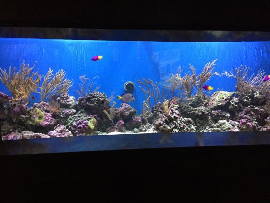 fishes picture of aquarium of niagara niagara falls