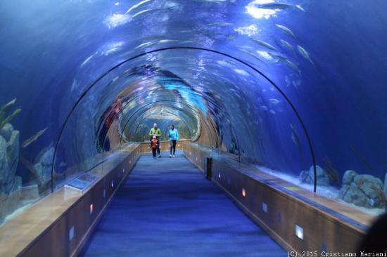 Fotos del acuario de georgia 71