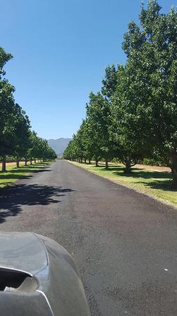 Robertson, Νότια Αφρική: photo2.jpg