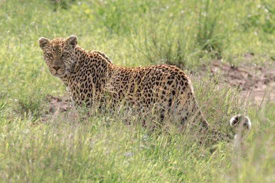 歌珊地非洲游猎之旅