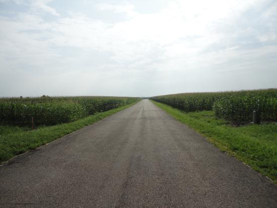 Elroy, WI: Nothing but Corn
