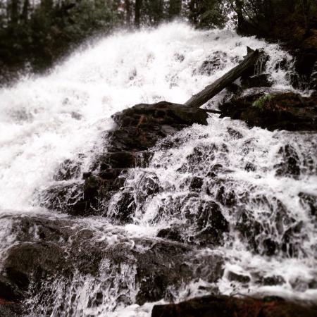 Vogel State Park Campground照片