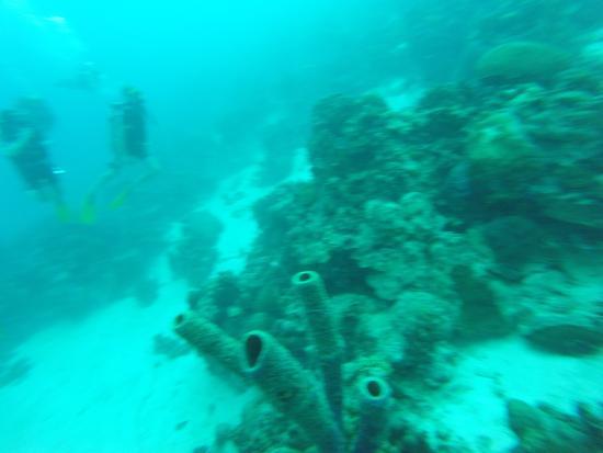 So much aqua life picture of divi dive bonaire kralendijk tripadvisor - Dive e divi ...