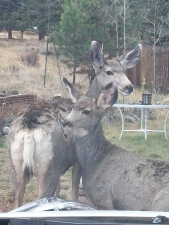 Drake, CO: Mom and Baby on the Carriage House property