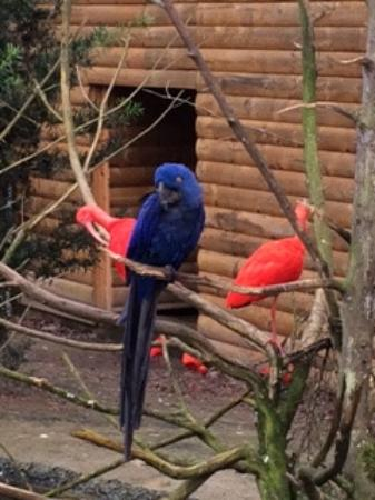 Scotland Neck, Северная Каролина: Blue Maccaw and Red Ibis