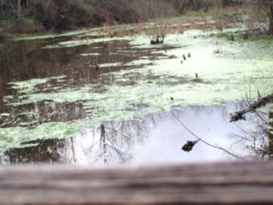 Scotland Neck, Северная Каролина: Beaver Blind