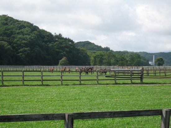 Niikappu-cho, اليابان: 馬が見られる