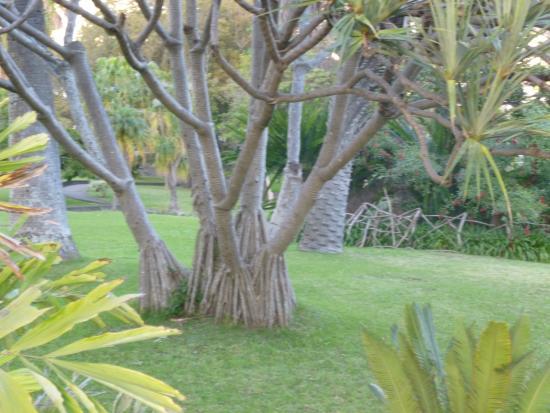 Quinta Magnolia Gardens