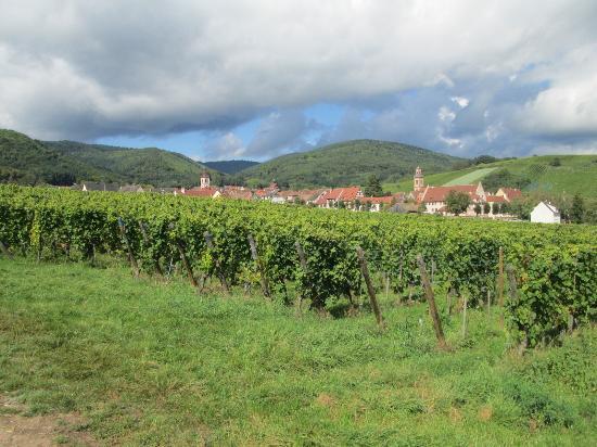 Sentier Viticole des Grands Crus : ぶどう畑からの街並み
