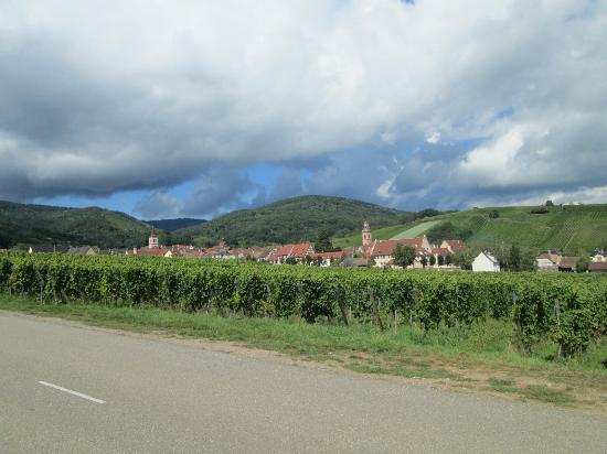 Sentier Viticole des Grands Crus : ぶどう畑
