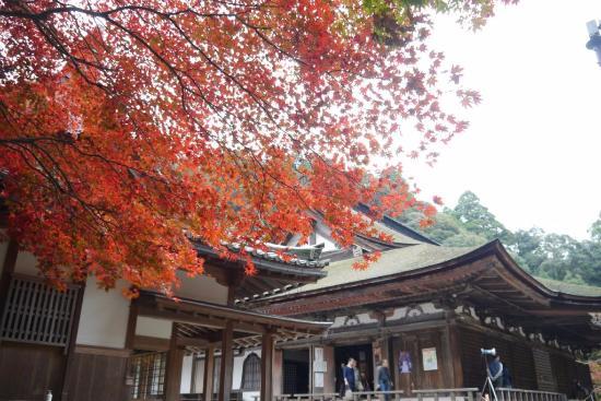 Kora-cho, Japonia: 西明寺本堂と紅葉
