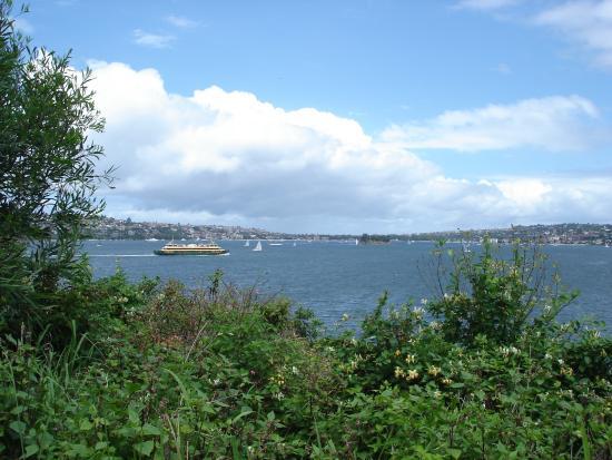 Bradleys Head Trail: Manly Ferry from Bradleys Head