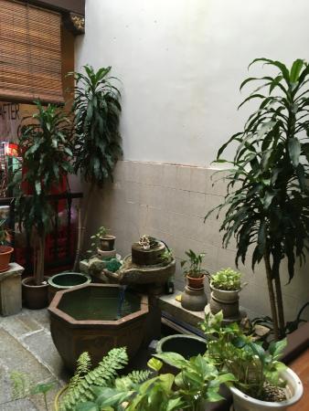 Armenian House: Mini Indoor Garden