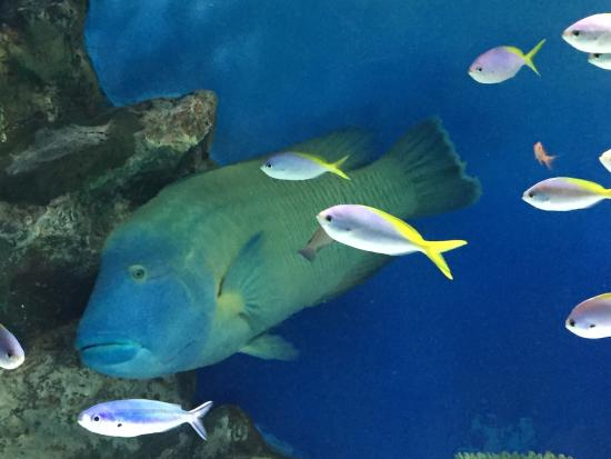 photo9.jpg - Picture of Otaru Aquarium, Otaru - TripAdvisor