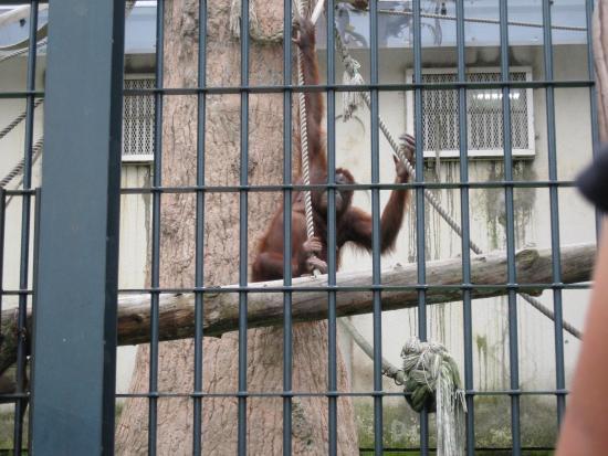 オラウンター - Picture of Asahiyama Zoo, Asahikawa - TripAdvisor
