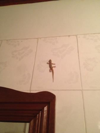 Bloom Garden Guesthouse: Nimble gecko