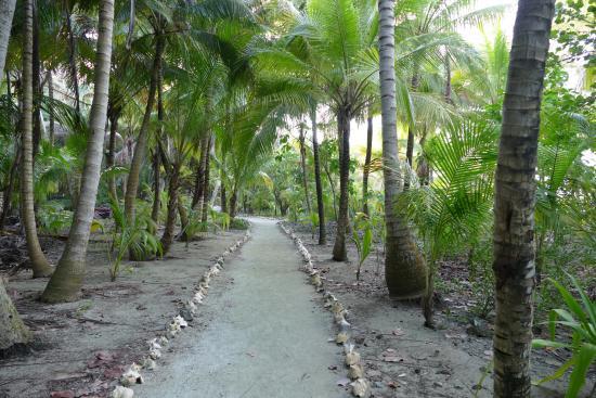 Glover's Atoll Resort: 15
