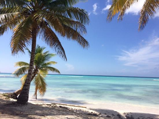 Saona Island : Beach!