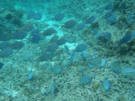 Banc de poisson - Picture of Pee Terre, Guadeloupe - TripAdvisor Banc Terre on
